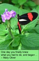 Butterfly_journey_1_2